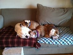 Bulldog Rule - if there be more than 1 bulldog there be a pile.