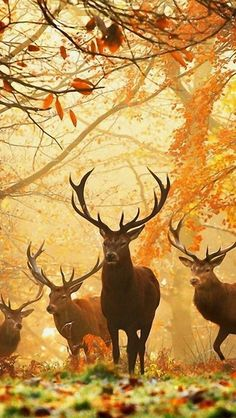 Nature Animals, Animals And Pets, Cute Animals, Autumn Animals, Wildlife Nature, Funny Animals, Beautiful Creatures, Animals Beautiful, Animal Photography