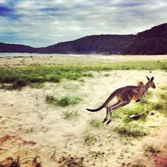 Pebbly Beach NSW #Australia