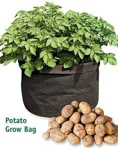 potato-grow-bag.jpg 270×338 pixels