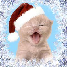 Happy Christmas Kitty cute animals cat happy animated kitten kitty christmas christmas pics