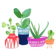 Clay planters