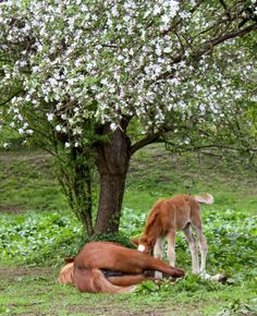 Ivana Piskáčková took this awesome photo that has animal, foal, horse, mammal in it Mammals, Horses, Plants, Planters, Horse, Plant, Words, Planting, Planets