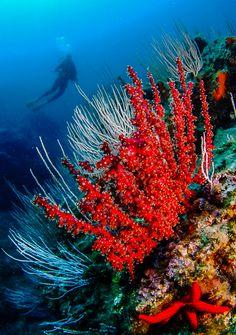 Under the Ocean Underwater Creatures, Underwater Life, Ocean Creatures, Under The Ocean, Sea And Ocean, Photos Sous-marines, Sea Plants, Coral Art, Ocean Pictures