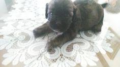 Adopta a Camada Habana ( Mestizo ) - #adopta #perros