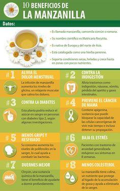 10 Beneficios de la manzanilla para nuestro cuerpo. #infografía #manzanilla