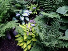 Really pretty variety of plants.  Love the way blue-green and lime-green hostas look together.