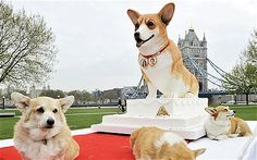 Real corgis gather around a giant corgi sculpted in sugar icing on top of a wedding cake(Made for HM Queen Elizabeth's Diamond Jubilee)