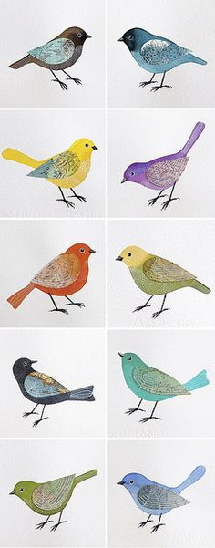 Bird illustrations by Geninne