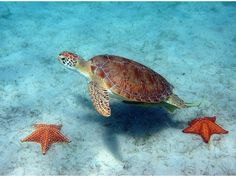 Nature of Cyprus, green turtle