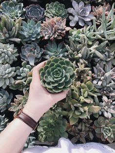 Succulents are so beautiful