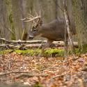 How to Hunt Deer: The 10 Most Important Deer Scouting Skills | Field & Stream