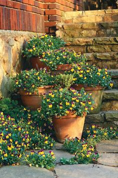 Repeat your plants in containers and flowerbeds. Pots of violas climb these front steps, seeming to spill out into the flowerbeds for a lush, fluid look.