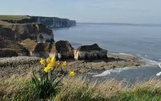 Image result for flamborough cliffs historical Places, Water, Outdoor, Image, Google Search, Gripe Water, Outdoors, Outdoor Games, The Great Outdoors