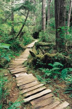 Welcome to luxury gone wild—a spa and tented safari resort on the edge of the world, Clayoquot Wilderness Resort in Tofino, Vancouver Island. Forest Trail, Forest Path, Wilderness Resort, West Coast Trail, Vancouver Island, Garden Paths, Pathways, Outdoor Gardens, Garden Design