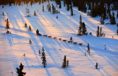 Four-time winner Lance Mackey drives his team between the Kaltag and Unalakleet checkpoints during the 2009 Iditarod Trail Sled Dog Race, Al...