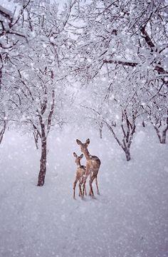 snow, reindeer