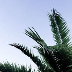 More on www.offwhiteswan.com Palm trees & blue sky 🌴☀️ crete, greece, vacation, botanic, #palmtrees #summer #sun #holiday
