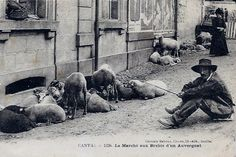 Le berger - Métiers d'autrefois - L'Internaute Actualite