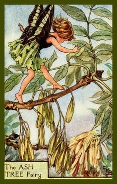The Ash Tree Fairy by Cicely Mary Barker from the 1920s. Quilt Block of vintage fairy image printed on cotton. Ready to sew.  Single 4x6 block $4.95. Set of 4 blocks with pattern $17.95.
