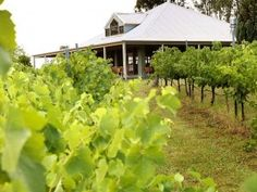 Spicers Vineyard Hunter Valley/ Australien WWW.WELTREISE-TRAUM.COM