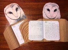 Amazing Science Ideas from Amazing Teachers: Owl Pellets Project