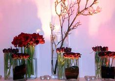 Contemporary vases of amaryllis and roses
