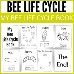 Bee Activities, Educational Activities For Kids, Sequencing Activities, Science For Kids, Bee Life Cycle, Life Cycle Craft, Education Humor, Art Education, Special Education