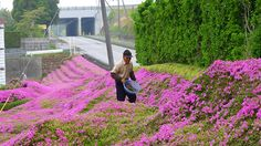 husband-plants-flowers-blind-wife-kuroki-shintomi-10