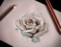 Realistic drawing of a rose