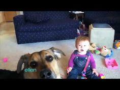 Ellen Found Funny Dog Videos!