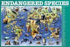 ENDANGERED SPECIES posters | art prints