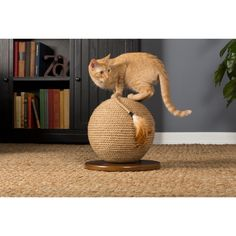 Kitty Power Paws Sphere is perfect for exercising paws and grooming nails. Durable jute wrapping encourages scratching while feather tipped tassel engages cats in play. Sphere shape provides additional opportunities for jumping and pouncing