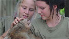 動物園で飼われていたウォンバット、お客さんのナデナデが足らず「うつ病」と診断される - DNA