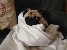 bilboofrochester:  Comfy cozy blanky :)