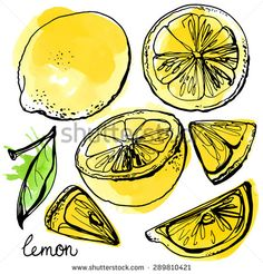 Lemons black line drawn on a white background. Vector drawing of fruits. Abstract spots. Colored lemons.