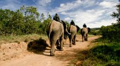 Get 10 outdoor and adventure ideas for your trip to Nelson Mandela Bay, which is home to amazing beaches, nature reserves and outdoor… Elephant Ride, Port Elizabeth, Adventure Activities, Nelson Mandela, Nature Reserve, Beach Fun, Fast Cars, Outdoor Activities, South Africa