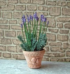 Miniature English lavender in an Italian pot 1 in by Marianne26
