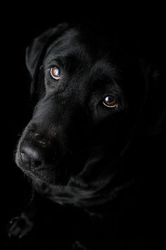 Abby 49.53 Black is beautiful | Flickr - Photo Sharing!