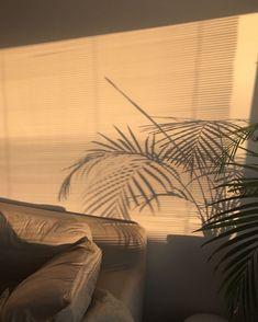 Classy Aesthetic, Beige Aesthetic, Film Aesthetic, Orange Wallpaper, Pastel Wallpaper, Aesthetic Backgrounds, Aesthetic Wallpapers, Bild Gold, Shadow Plants