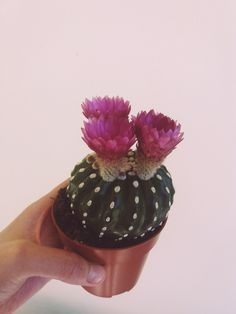 special cactus.