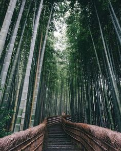 This Amazing Image Is Being Called The Most Beautiful Photo Of - This amazing image is being called the most beautiful photo of kyoto ever