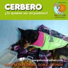 Cerbero