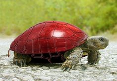 Apple Turtle - Worth1000 Contests