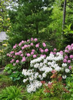 rhododendron rabatt how to grow azaleas and rhododendrons, flowers, gardening, how to, The Garden of Duff Donna Evers Azaleas Landscaping, Garden Shrubs, Flowering Shrubs, Trees And Shrubs, Shade Garden, Trees To Plant, Backyard Landscaping, Garden Plants, Gardening Vegetables