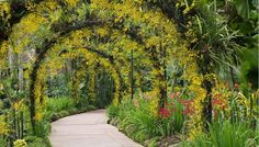 25 Charming Garden Trellises and Arbors - Garden Lovers Club Singapore Island, Visit Singapore, Singapore Travel, Singapore Attractions, Singapore Botanic Gardens, Singapore Garden, Design Jardin, Orchids Garden, Gardens By The Bay