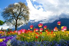 A meadow full of vibrant flowers.  Home.  Deep Breath.  Home...