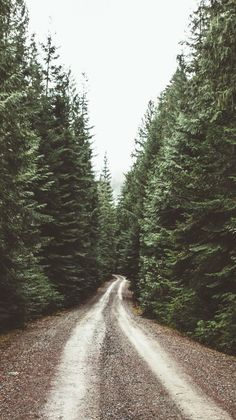 Wallpaper iPhone #nature#forest road