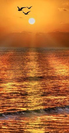 Gulls at sunrise • photo: Glowworm on 99px