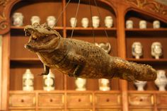 crocodile, old chemist's shop, Heidelberg-Germany